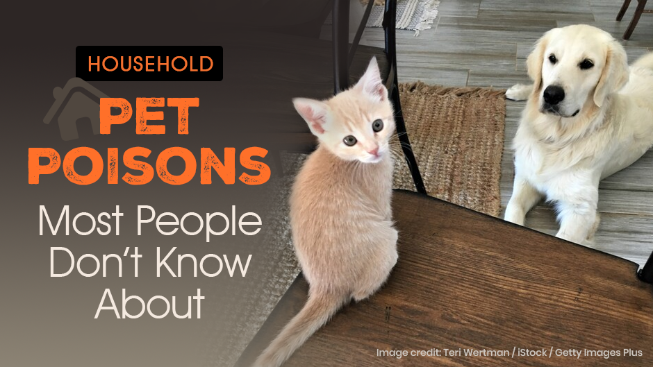 Household Pet Poisons Most People Don't Know About