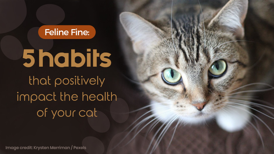 5 habits that positively impact the health of your cat